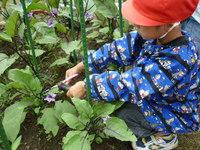 収穫3のサムネール画像