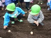 野菜植えうさぎのサムネール画像