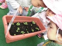 菜園のサムネール画像