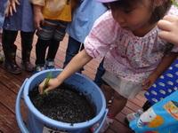 バケツ稲④のサムネール画像