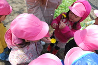 春探しうさぎ3のサムネール画像
