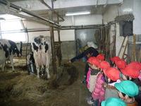 搾乳の様子のサムネール画像