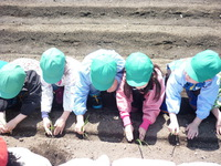 畑 玉ねぎのサムネール画像
