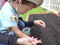 種蒔き.JPGのサムネール画像のサムネール画像